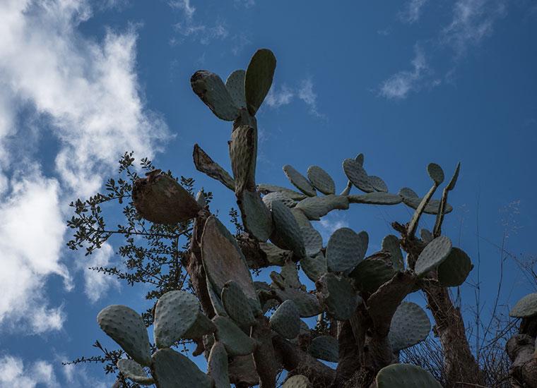 genus, video, doc, Carmelo, gravina di ginosa, la murgia abbraccia matera, video , dsrl, cactus